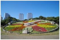 20161105_幕張海浜公園花時計.jpg