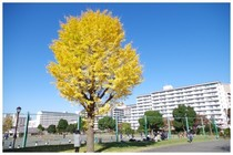 20161126汐入公園.jpg