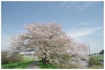20170415_新川の桜.jpg