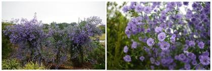 20171014_紫の花.jpg