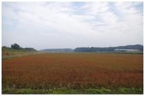 20171104_そば畑.jpg