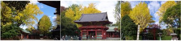 20171113_根津神社.jpg