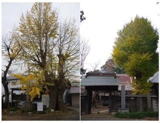 20171118_来迎寺と西輪寺.jpg