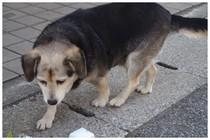 20180103_滝不動に居た犬.jpg