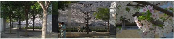 20180328_目黒川�A.jpg