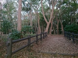 20181101_市民の森.jpg