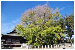 20181117_千本桜.jpg