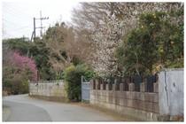 20190223_花の道.jpg