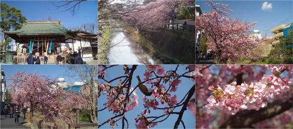 20200224_松戸坂川沿い.jpg