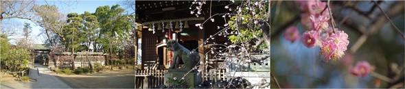 20200224_白幡神社.jpg