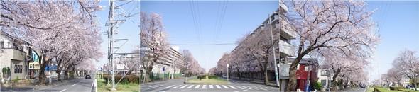 20200322_五香六実.jpg