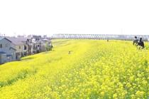 20200322_江戸川堤.JPG