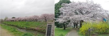 20200328_高田橋.jpg