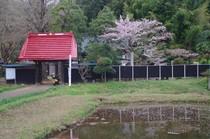 20200405_結縁寺.JPG