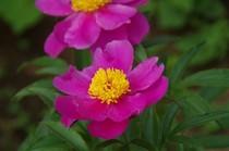 20200513_医王寺の花.JPG