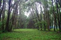 20200523_神々廻の森3.JPG