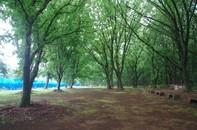 20200523_神々廻の森2.JPG
