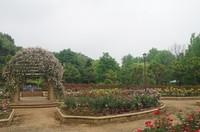 20200527_柏の葉公園.JPG