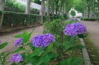 20200621_南山の遊歩道1.JPG