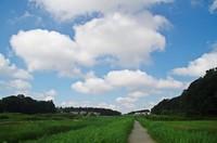 20200801_木戸川.JPG