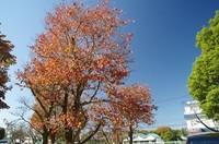 20201025_構内の木.JPG