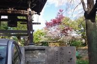 20201123_10月桜とモミジ.JPG