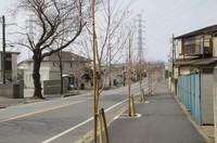 20210319_二和道の若い桜.JPG