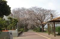 20210319_遊歩道.JPG