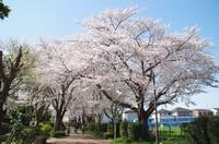 20210327_白井木戸公園への歩道1.JPG