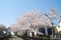 20210327_白井木戸公園への歩道2.JPG