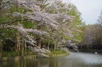 20210328_貝柄山公園2.JPG