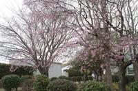 20210328_鎌ヶ谷市運動公園の.JPG