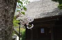 20210403_福寿院観音堂.JPG
