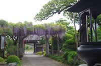 20210425_佛法寺の藤.JPG