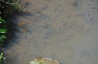 20210430_結縁寺前の池.JPG